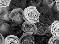 Purple Roses Tumblr