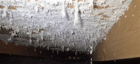 rid  white mold effectively   home
