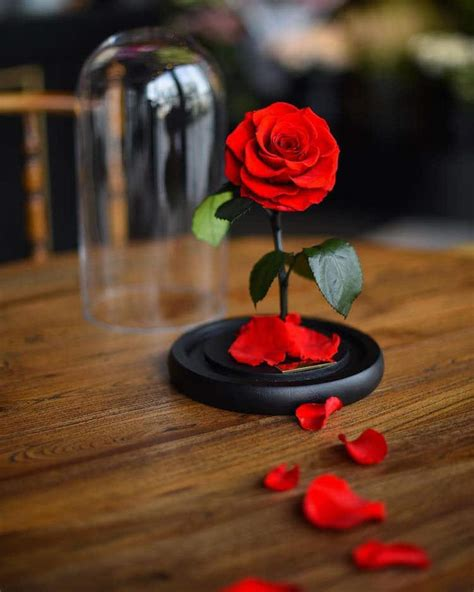 Beauty And The Beast 2017 Photos Real Enchanted Rose Lasts 3 Years Without Water Or Sunlight