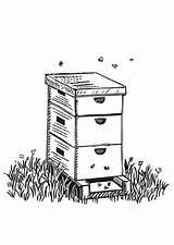 Beehive Coloring Edupics Bee Sheets Printable sketch template