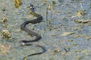Große Reptilien Für Zuhause : reptilien ~ Lizthompson.info Haus und Dekorationen