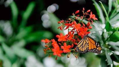 Butterfly Flower 5k Wallpapers Grass Blade Leaf