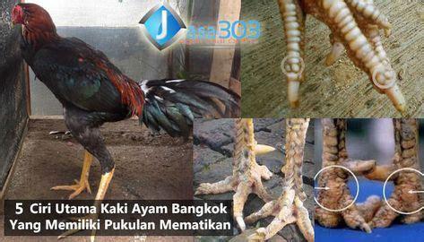 Bentuk dan model kaki ayam petarung pukul saraf/ko : Bentuk Dan Model Kaki Ayam Petarung Pukul Saraf/Ko : Sang ...