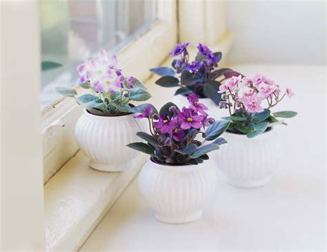 8 easy care flowering houseplants