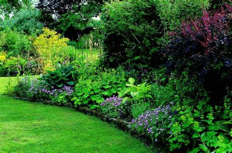 shade trees for small gardens gardening shade gardening shade garden ideas
