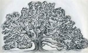 Draw An Oak Tree. Angel Oak Tree.