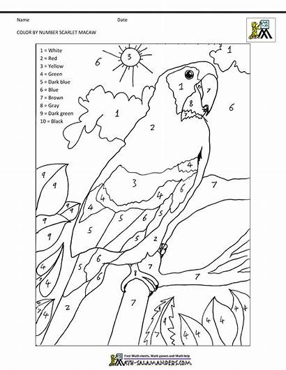 Pages Math Macaw Coloring Number Scarlet