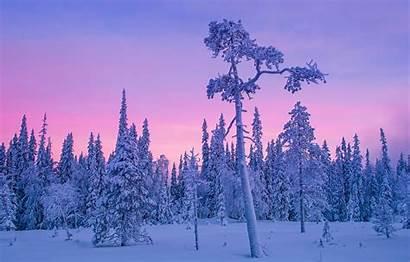 Finland Winter Forest Night Polar Snow Trees