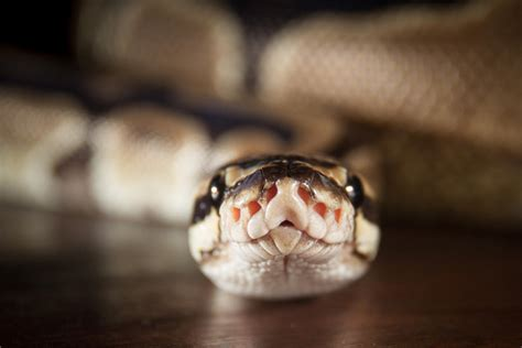 video tutorial  python  programming simple