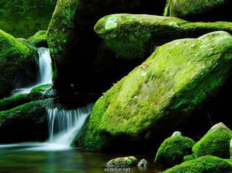 Wallpaper Green Nature by Lush Green Nature Photographic Best Lcd Desktop