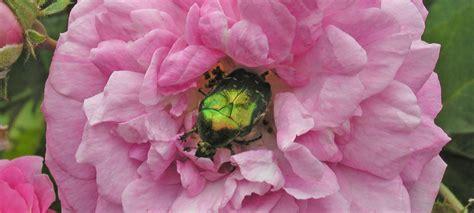 Welches Tier Frisst Pilze Im Garten by Schaedlinge Ratgeber Informatives
