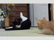 Gatorama vol 44 Las mejores fotos de gatos de la semana