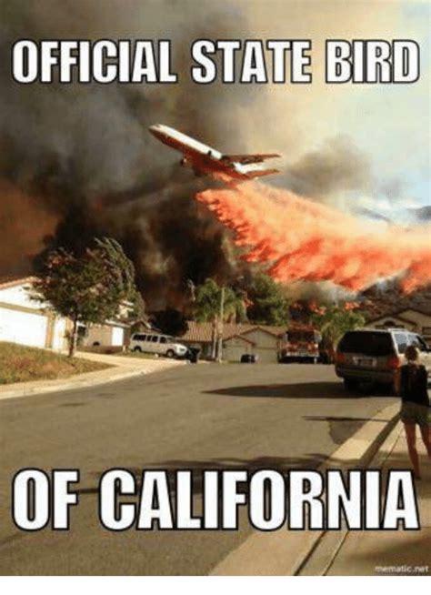 California Memes - 25 best memes about state bird state bird memes