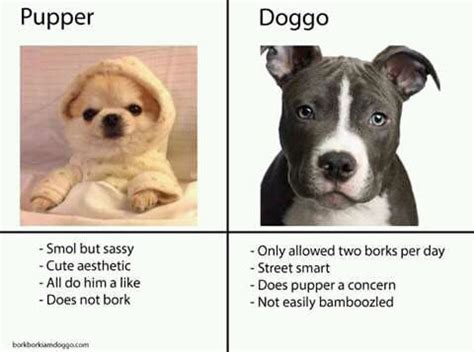Pupper Memes - doggo memes that will make anyone rofl