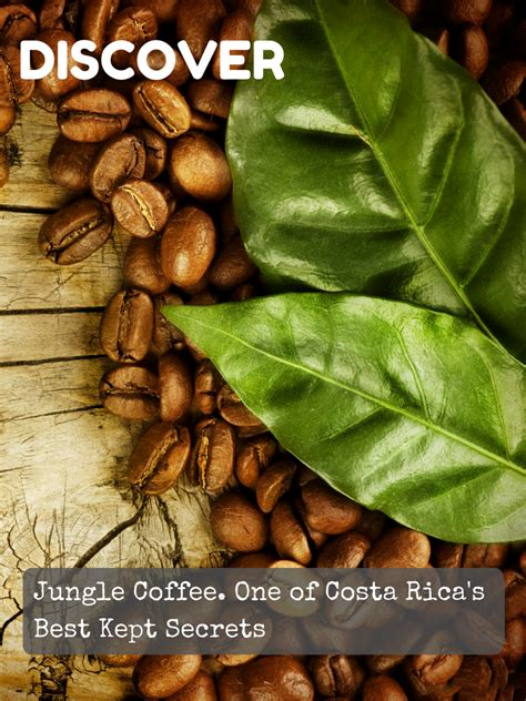 In this article, we're diving into costa rica's coffee culture, and we're detailing the best costa rican coffee beans money can buy! Amazon.com : Jungle Costa Rican Coffee Beans Organic Dark Roast Whole Bean 1 lb Gourmet Best ...