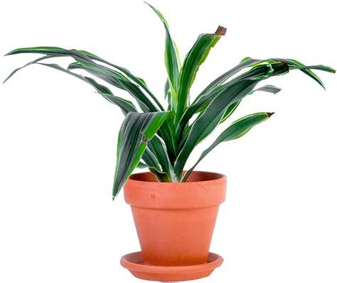 render plante en pot verte nature autres inconnu png image sans fond post 233 par