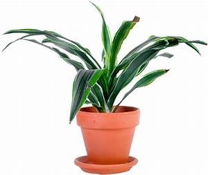 Pot De Fleur Transparent : petite plante verte en pot photos de magnolisafleur ~ Teatrodelosmanantiales.com Idées de Décoration