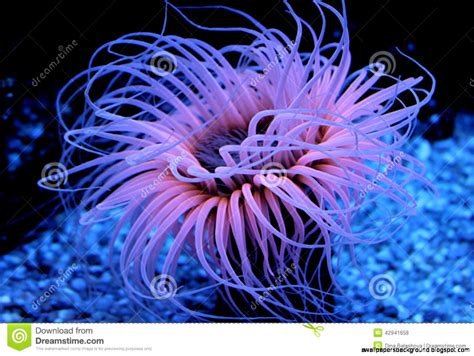 Beautiful Sea Animals Wallpapers - beautiful sea creatures wallpapers background