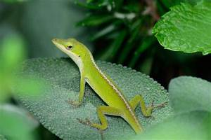 How to Take Care of a Pet Lizard | Caring Pets