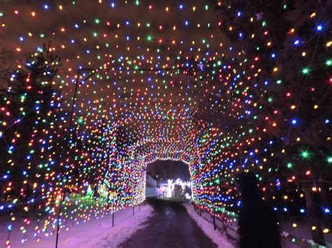 lights at the detroit zoo january 2014 detroit mi