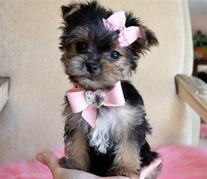 Cute Little Puppy Pictures, Photos, and Images for ...