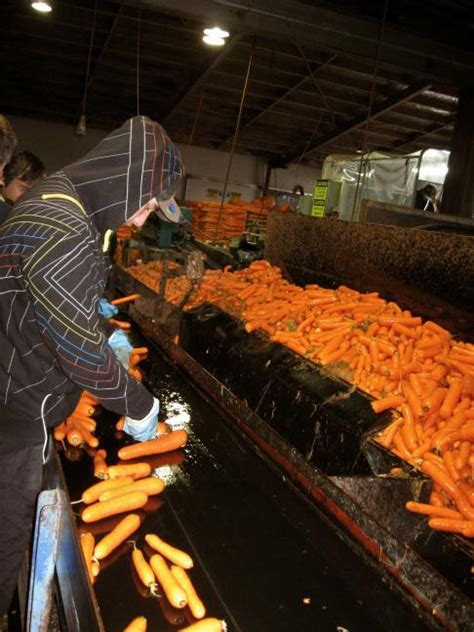 carrot carnival ohakune  zealand farm visits