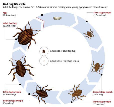 ecoraider  pest management professionals  life