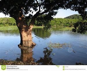 Baum Am Wasser : baum im wasser stockbild bild 474181 ~ A.2002-acura-tl-radio.info Haus und Dekorationen