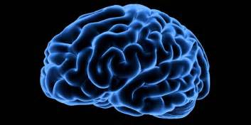 Figuring Out The Human Brain And How Being On The Autism