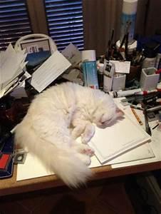 Choupette Chat Karl : choupette le livre du chat jet set de karl lagerfeld mode et voyages ~ Medecine-chirurgie-esthetiques.com Avis de Voitures