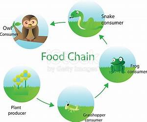 Food Chain For Kids Stock Vector Art & More Images of ...