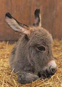 15 baby donkeys great inspire