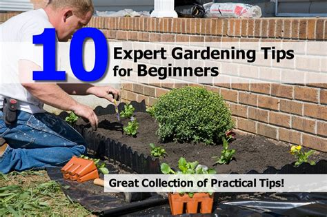 Gardening For Beginners by House Gardening Ideas For Beginners Photograph 10 Expert G