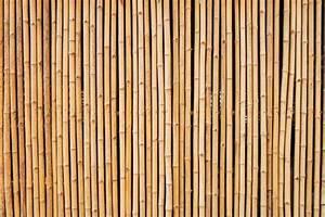 Bambus Als Sichtschutz : bambus als sichtschutz vor und nachteile ~ Eleganceandgraceweddings.com Haus und Dekorationen