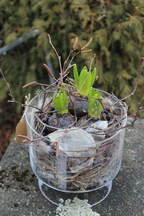 fruehlingsdekoration selber machen hyazinthe  glasgefaess