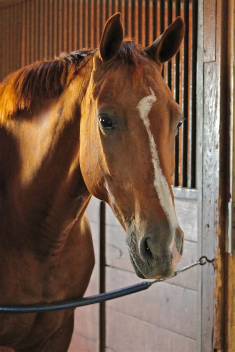 horses barn horse months gestation pregnant period days portraits lady wait while baby wow she