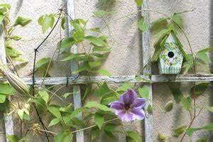 Rankhilfe Für Zimmerpflanzen : rankhilfen kletterhilfen und spaliere f r kletterpflanzen ~ Yasmunasinghe.com Haus und Dekorationen