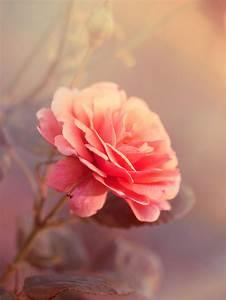 carnation on Tumblr