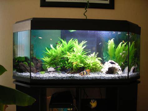 le led pour plante aide choix plante facile pour aquarium 240l