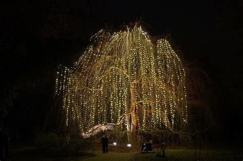 Berlin Botanischer Garten Beleuchtung by The World S Best Photos Of Garden And Weihnachten Flickr