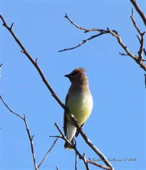 birding around bend bend branches