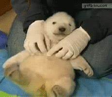 Cute Animal GIF - Find & Share on GIPHY