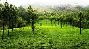 Nature Pictures: Nature Photography Kerala