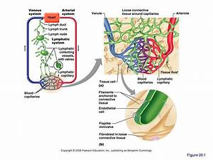 Pin On Anatomy And Physiology