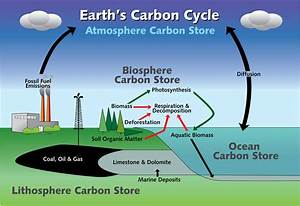 Life Is Science Is Life  The Carbon Cycle