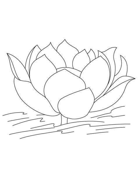 Lotus flower in water coloring pages | Download Free Lotus flower | Flower coloring pages, Lotus