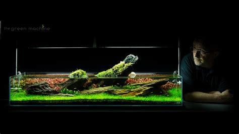 The Green Machine Aquascape by Aquarium Aquascape Tutorial Guide Crimson Sky By