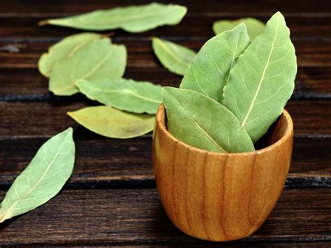 bay leaf substitute 4 amazing curry leaves substitute organic facts