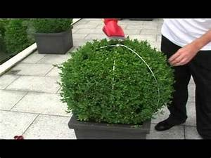 Buchsbaum Schablone Kaufen : egrola buchs kugelschnitt schablonen mp4 youtube ~ Watch28wear.com Haus und Dekorationen