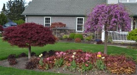 japanese redbud tree photos landscaping ideas what plant goes where in the landscape